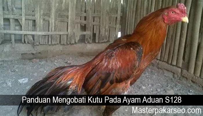 Panduan Mengobati Kutu Pada Ayam Aduan S128