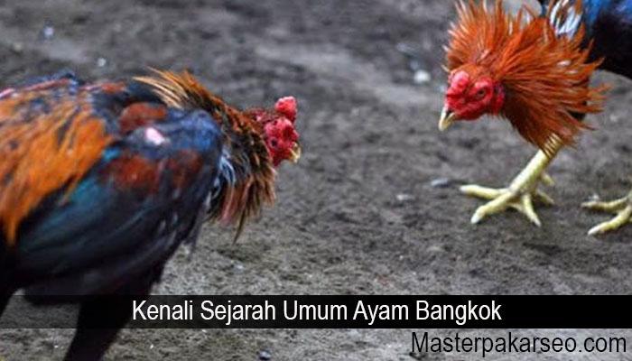 Kenali Sejarah Umum Ayam Bangkok