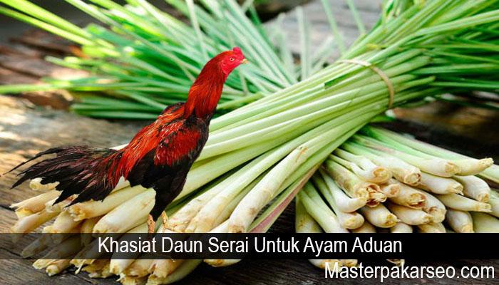 Khasiat Daun Serai Untuk Ayam Aduan