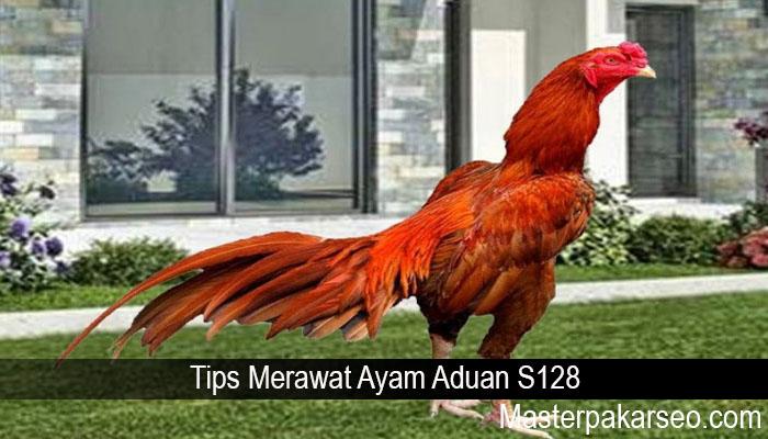 Tips Merawat Ayam Aduan S128